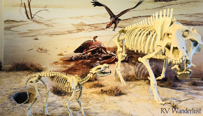 Agate Fossil Beds Visitor Center Display