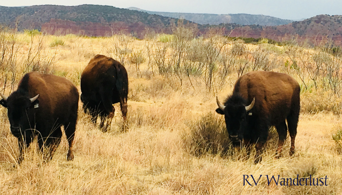 Caprock Canyons State Park Bison Herd